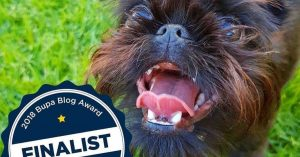 Four-Power-Pets-named-as-Finalists-in-Bupa-Blog-Awards-2018-Feature-Image