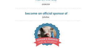 Power-Pets-sponsor-Valentine-the-Cow-at-Edgars-Mission-Feature-Image