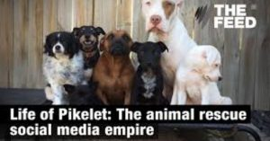 Pets-in-all-the-right-places-Power-Pets-in-the-Media-Feature-Image