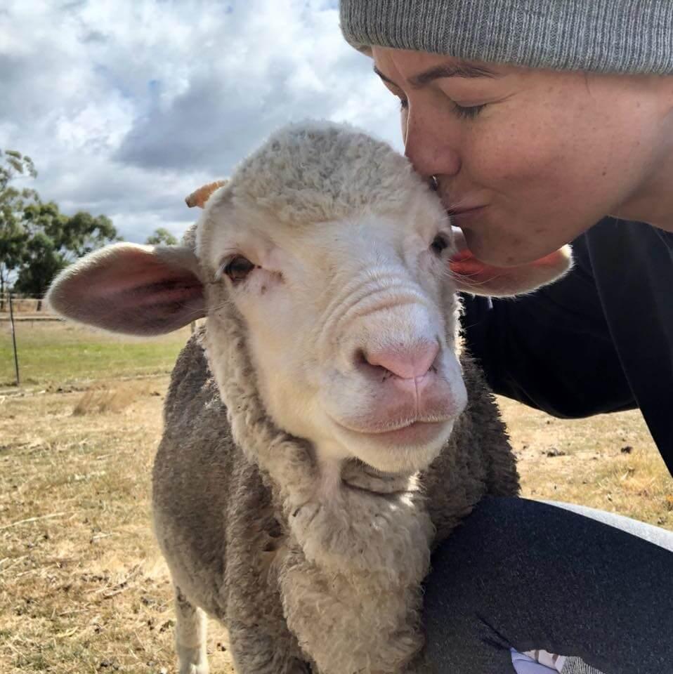 Power-Pets-King-Louis-Lamb