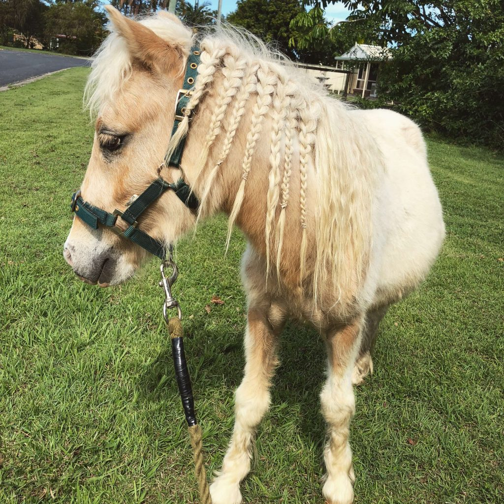 Power-Pets-Apollo-Mini-Horse-3