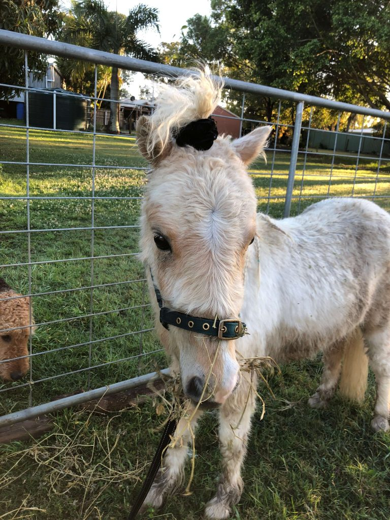 Power-Pets-Apollo-Mini-Horse-4