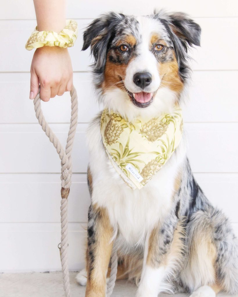 Power-Pets-Aubrey-the-Aussie-1