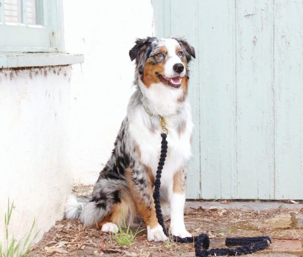 Power-Pets-Aubrey-the-Aussie-4