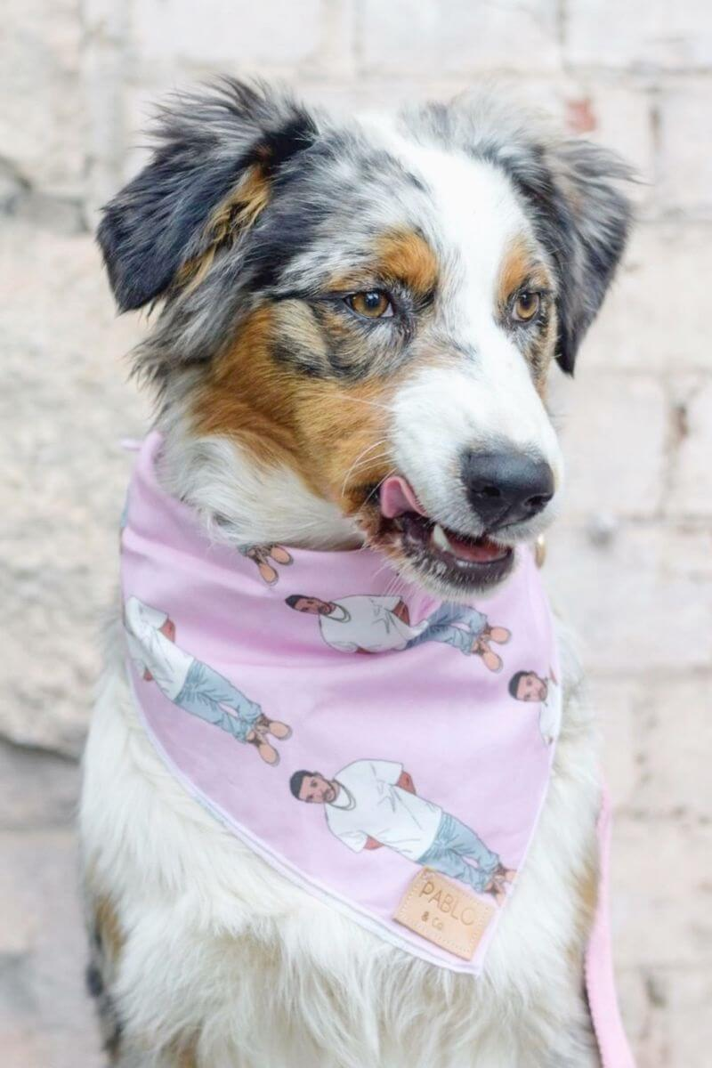 Power-Pets-Aubrey-the-Aussie-Feature-Image
