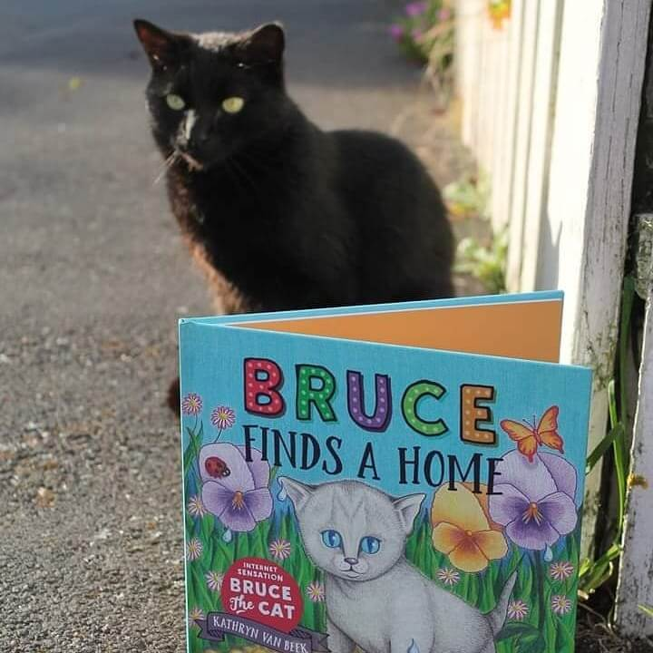 Power-Pets-Bruce-the-Cat-3