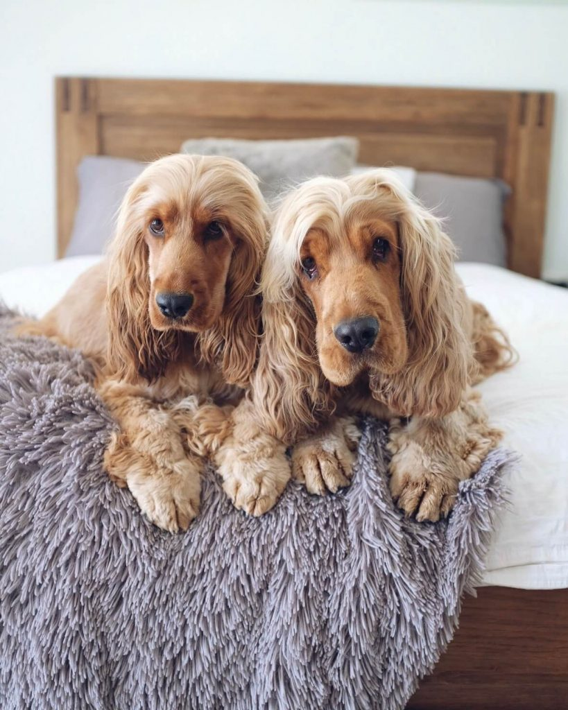 Power-Pets-Charlie-and-Frankie-2