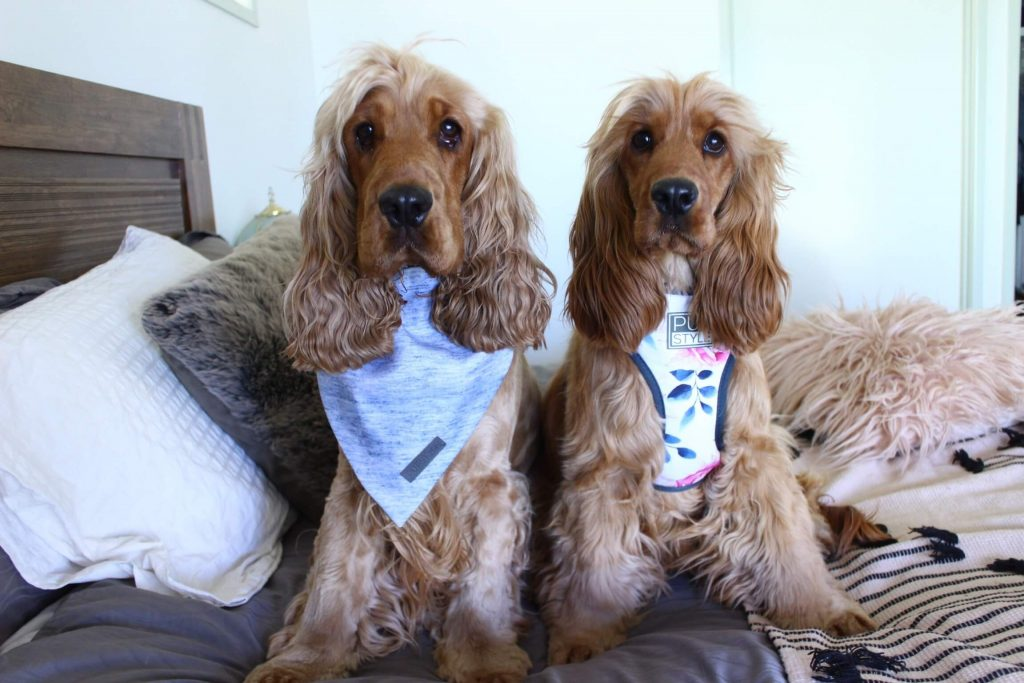 Power-Pets-Charlie-and-Frankie-6