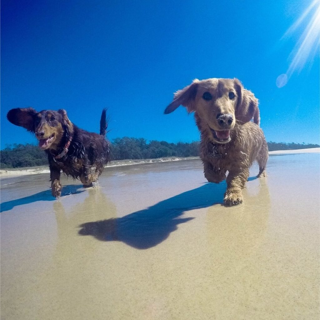 Power-Pets-Doxies-Down-Under-2