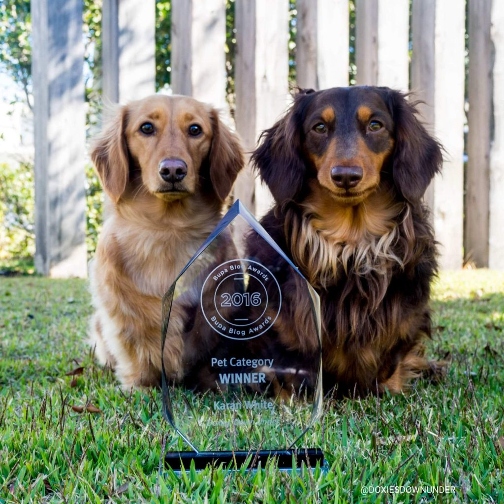Power-Pets-Doxies-Down-Under-8