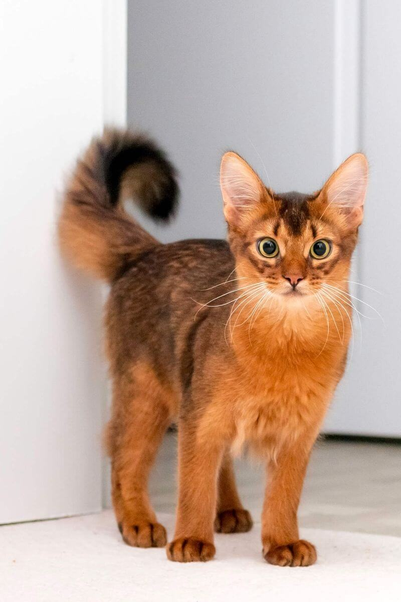 Power-Pets-Errol-the-Cat-Feature-Image