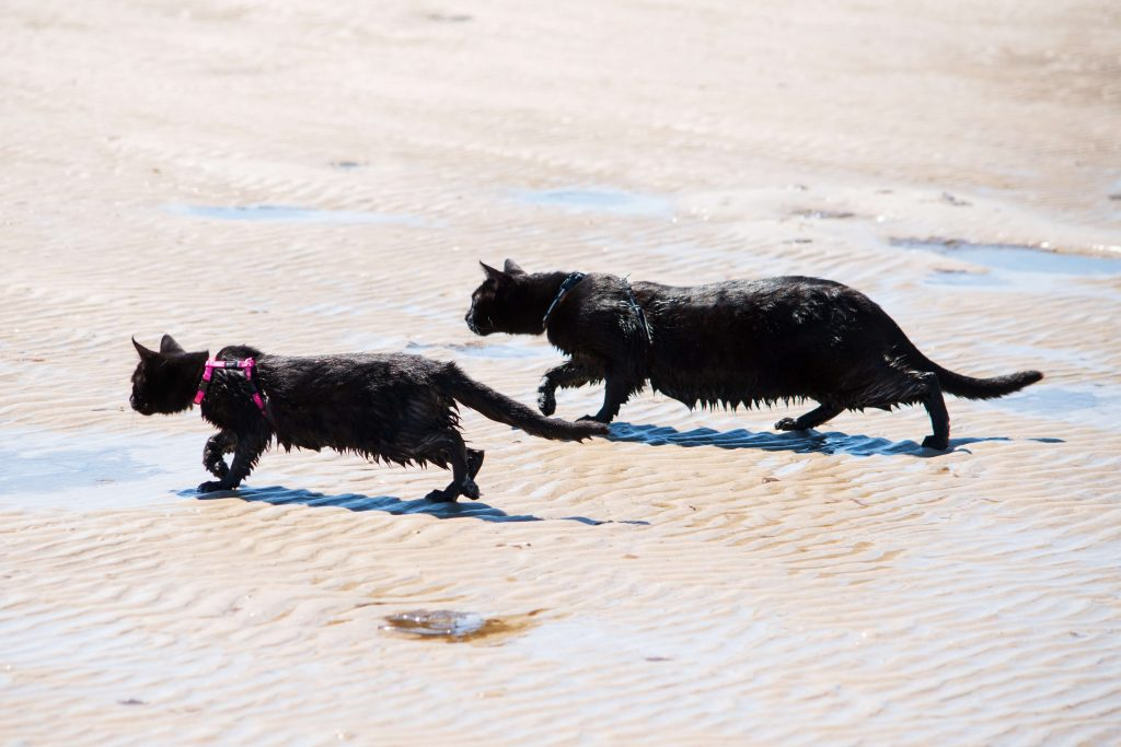 Power-Pets-Nathan-the-Beach-Cat-3