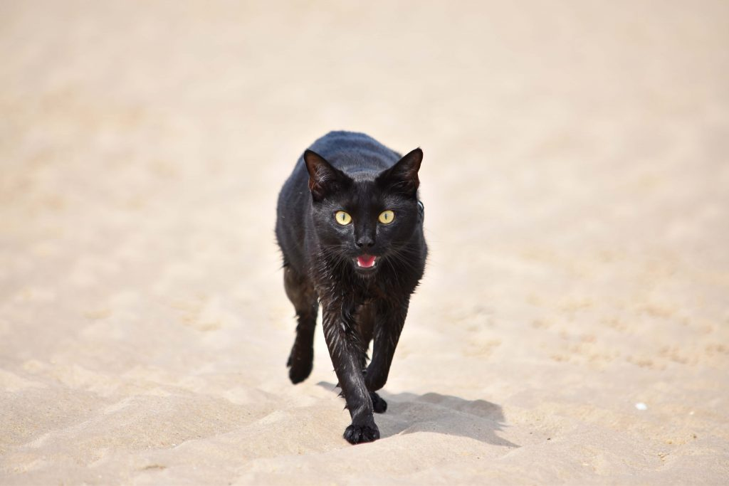 Power-Pets-Nathan-the-Beach-Cat-7