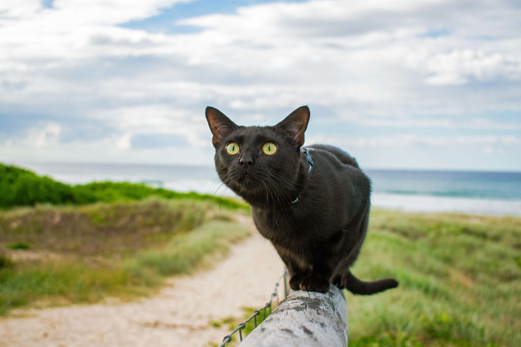 Power-Pets-Nathan-the-Beach-Cat-8