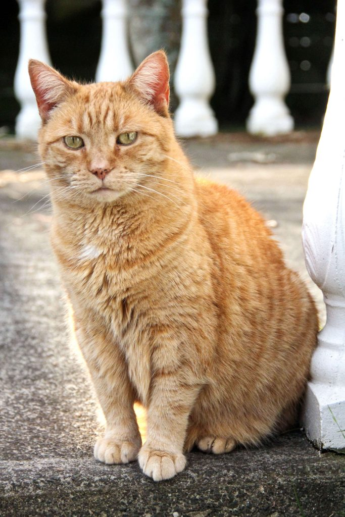 Power-Pets-Puffy-Ginger-Girl-2