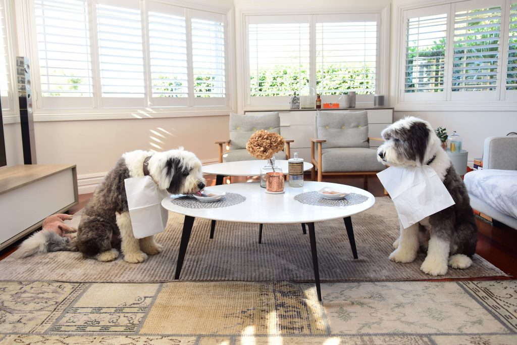 Power-Pets-Two-Dulux-Dogs-3