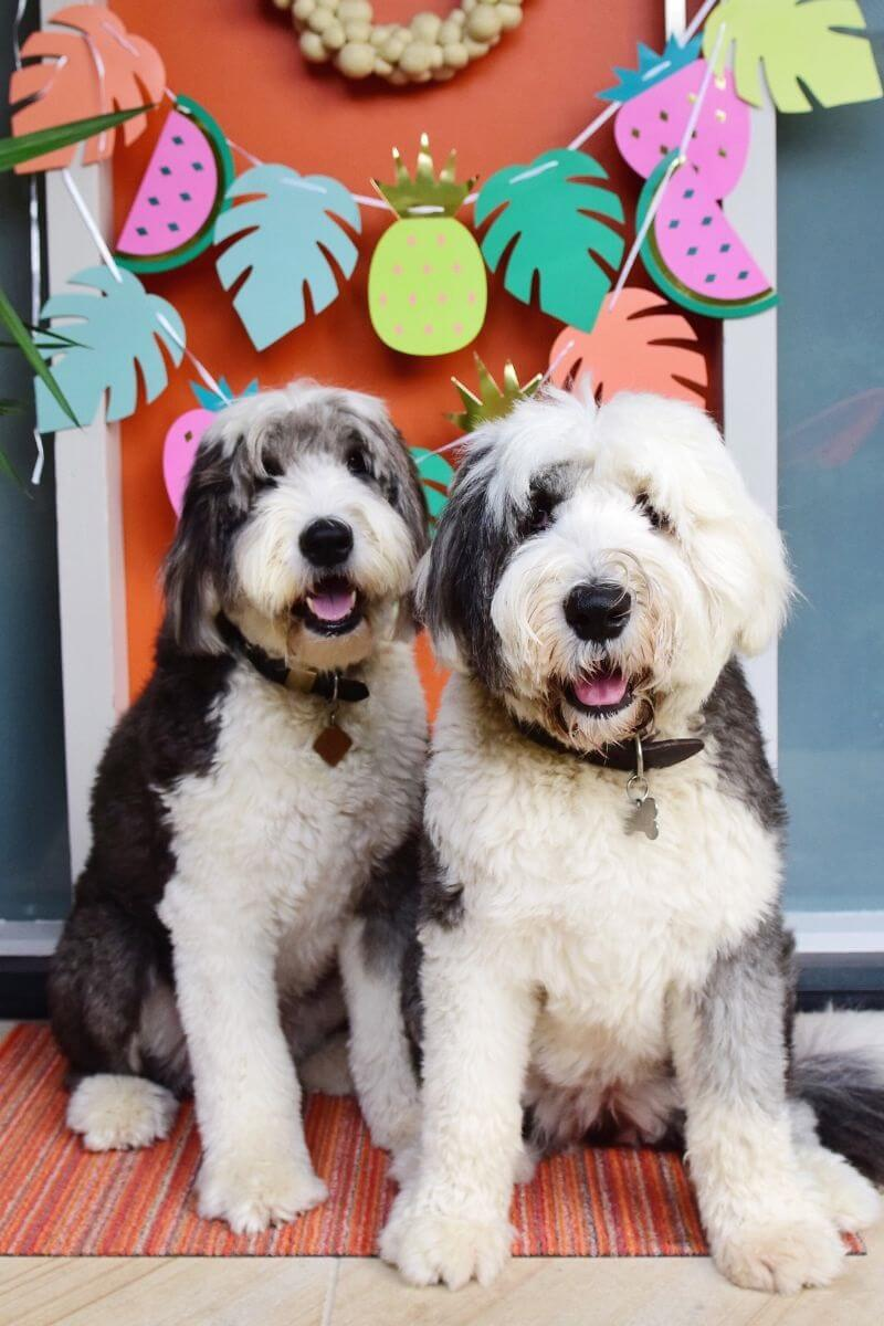 Power-Pets-Two-Dulux-Dogs-Feature-Image