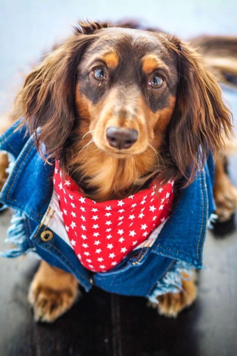Power-Pets-Doxies-Down-Under-Feature-Image