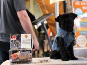 power-pets-support-pets-of-the-homeless-at-melbourne-dog-lovers-show_custom